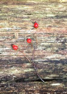 16-12-25-lake-berries-z