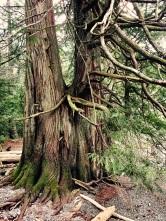 16-12-25-lake-tree-y-soft-z
